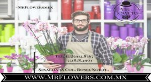 Distribuidor de Flores - Mr. Flowers atención