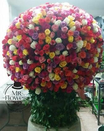 1000 Rosas