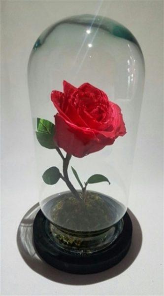 Rosa en Cristal