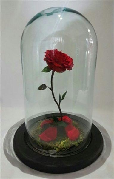 Rosa en Cristal de la Bella y la Bestia