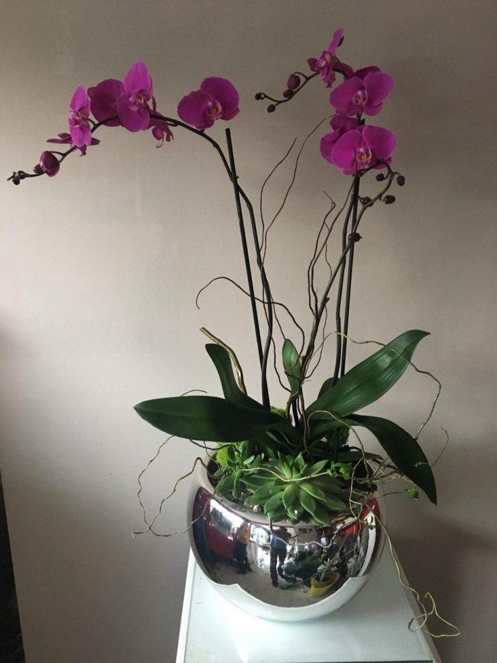 Orquídea Phalenopsis en espejo