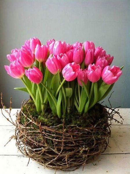 Nido con 30 Tulipanes